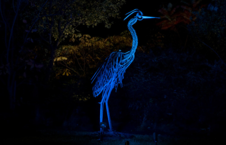 illuminated bird feature