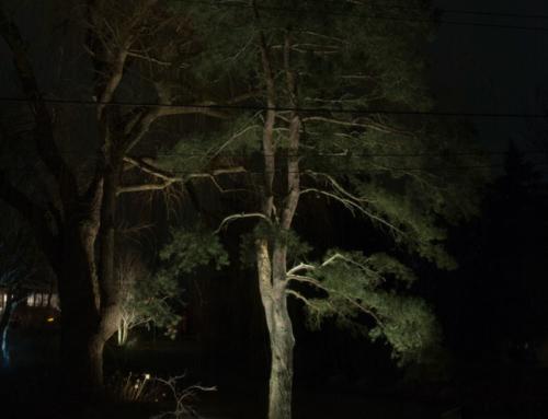 LAYERING LIGHTING: TRANSFORMING YOUR BASIC BACKYARD INTO ARTWORK