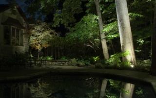 illuminating upper canopy of trees