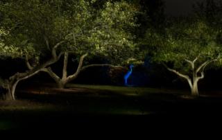 evening landscape lighting